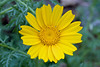 IMG_7257 (Alessandro Grussu) Tags: flowers plant flower macro 20d canon pflanze blumen fiori blume fiore pianta