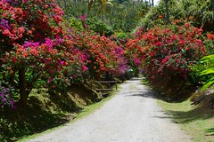 Nature St Lucia. (ost_jean) Tags: nature colors fleurs nikon jean natuur fiore stlucia planten ost bloemen kleurrijk d5200