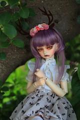 IMG_4236 (sa_0756) Tags: tree dolls vampire bjd dim bjddoll dimkassia