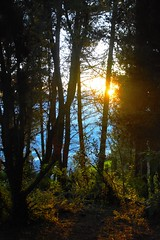 Through the forest (Marco A Rodriguez) Tags: sunset sunlight sol forest atardecer woods bosque