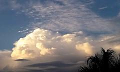 The clouds..... (ana.jerlich) Tags: blue sunset sky white tree clouds bluesky cielo nuvens ceu