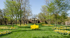 Yellow Couch at Cantigny (Jim Frazier) Tags: 2016 allee april blooms botanic botanicgarden botanicalgarden botanicalgardenspublic cantigny cantignypark couch daffodils dupage dupagecounty flowers gardens house il illinois jimfraziercom landscape mansion nature park parks preserve scenery scenic spring wheaton yellow chair q3 headon centered centralperspective pov symmetry symmetrical perpendicular linedup botanicalgardenspublicgardenmuseumhorticulture fastpictures f10