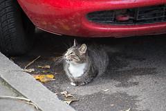 Smile (akk_rus) Tags: pet pets nature animals nikon feline europe bulgaria gato nikkor 70300mm d800 straycats   streetcats    70300mmf4556gvr  nikkor70300mmf4556gifedafsvr nikond800