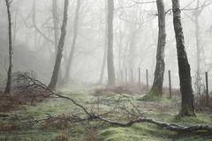 Padley Path (Russ Barnes Photography) Tags: