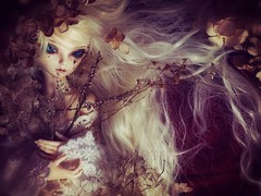 (Nirmrill) Tags: flowers dolls dreamy bjd hydrangea fairyland driedflowers minifee rheia