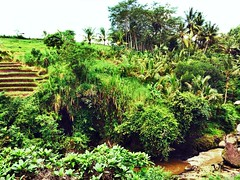 2014-03-14 12.53.02 (amaralisgroup) Tags: ocean sea bali mountain tree nature rock palms indonesia mushrooms island asia rice magic jungle ricefields supernatural hallucinations