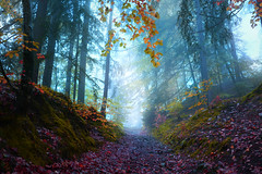 The Path of Praj (Andrea Effulge) Tags: autumn mist mountains fall nature leaves misty fog forest death ancient colorful spirit path magic dream foggy surreal atmosphere soul dreamy spirituality wisdom magical mythology atmospheric myth forestpath dreamscape redleaves lore mythical sorcerer prajna sorcery mountainforest phoenixfeatherxlight andreaeffulge phoenixfeatherlight