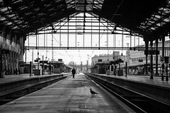 (Tom Plevnik) Tags: street new city travel people urban blackandwhite paris public monochrome landscape photography nikon flickr outdoor candid places human trainstation bnw