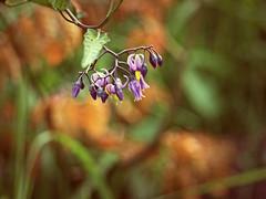 2016-06-13_18-20-28 (torstenbehrens) Tags: flower nature bokeh olympus e520 digital camera zuiko ed 40150mm f4056 four thirds