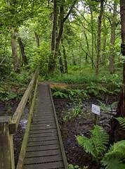 Footbridge (ttbeep) Tags: green woods footbridge naturereserve yorkshirewildlifetrust adeldamnaturereserve