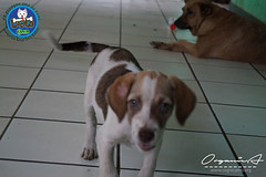 DSC08186 (OrgNicAmb) Tags: dogs perros nicaragua refugio mascotas masaya peluditos recataditos casahogarlucito orgnicamb