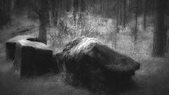 Thanks for one million views (pszcz9) Tags: las blackandwhite bw tree nature monochrome stone forest landscape spring poland polska wiosna przyroda kamie drzewo beautifulearth pejza