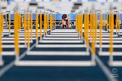 GP Brasil Caixa de atletismo 19jun2016-826 (plopesfoto) Tags: salto esporte martelo gp atletismo atleta vara sobernardodocampo olimpiada medalha competio barreiras arremesso esportista 800metros 100metros cbat arenacaixa