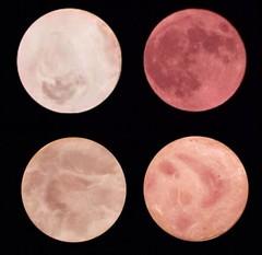 Luna de jamn (MysteryPlanet.com.ar) Tags: luna jamon