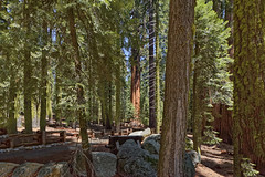 Sequoia National Park  14 (Largeguy1) Tags: park trees canon giant landscape mark national ii 5d approved sequoia