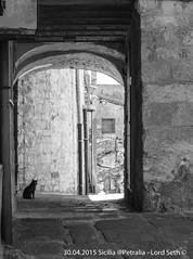 Petralia (Lord Seth) Tags: 2015 d5000 lordseth petralia sicilia bw biancoenero borgo gatto italy medievale nikon vicoli