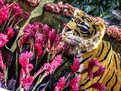 Rose Parade Flower Tiger (KnightedAirs) Tags: flowers rose digital canon photography photo los angeles tiger bowl powershot parade pasadena float s100