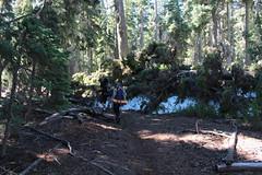 One of ten thousand detours around fallen trees (rozoneill) Tags: sky lake cold liza rock creek forest river spring elizabeth lakes fremont trail national wilderness rogue siskiyou winema trailhead isherwood notasha