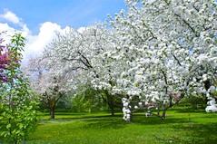 (Pierre thier) Tags: montral montreal paysage paix jardinbotanique mditation jardinbotaniquemontral treesubject d300s nikond3oos