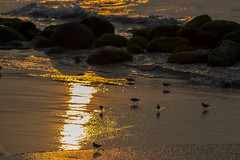Sunrise (Glory_Day) Tags: luz beach birds sunrise playa amanecer reflejo