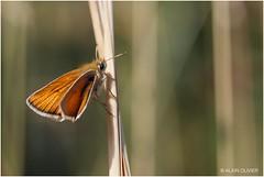 Papillon sur le bord du chemin