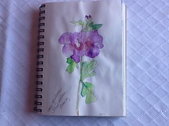 Rose of Sharon - blind contour drawing (MMUUGGSS007) Tags: summer sketch blind drawing contour