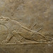Lion Hunts of Ashurbanipal, dying lioness