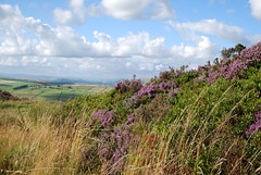 Couleur pourpre (dominiquita52) Tags: countryside heather yorkshire campagne cowling pinacle bruyre