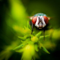 The Visitor (80D-Ray) Tags: macro green reversedlens insectbug ef50mm18iifly
