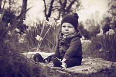 Spring (bkiwik) Tags: park flowers boy newzealand christchurch baby digital canon spring canterbury nz dslr hagleypark daffidols eos6d littlelusker