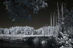 IMG_2337 (Dan Correia) Tags: amherst swamp clouds reflection infrared photoshop canonef35mmf2 15fav topv111 topv333 topv555 topv777