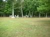 GreyhoundPlanetDay2008031