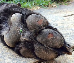 674 (Jasper Kyodaina) Tags: feet animal giant paws squish crush