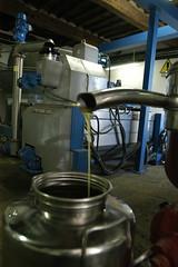 K2_07_9617 (giordano torretta alias giokappadue) Tags: toscana olio frantoio altreparolechiave
