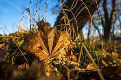 2013-10-31-Herbstfotos-20131031-083543-i082-p0021-SLT-A77V-16_mm-.jpg
