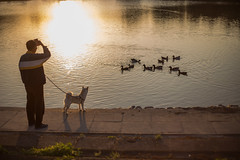 How does it taste? (Taipei street life) Tags: sunset sun lake reflection animal duck afternoon watch 台灣 新北市 三峽區