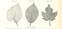 Anglų lietuvių žodynas. Žodis lower carboniferous period reiškia mažesnis carboniferous laikotarpis lietuviškai.