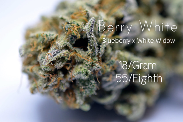 Berry White Cannabis Sativa dominant Hybrid