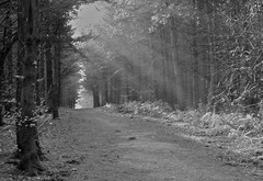 Chevin Forest Park (Macromate) Tags: park morning light sun woods rays chevin