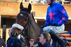 Cue Card (hyperionone) Tags: pink blue horse eye face head jockey winner horseracing cheltenham racehorse thoroughbred tack chaser silks kingstheatre cuecard topclass nationalhunt noseband stakeswinner haydockbetfairchase joetizzard ryanairchase