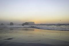 Hazy Evening (stephencurtin) Tags: sunset orange color bird beach wet tangerine oregon sand rocks soft waves shore bandon hazy thechallengefactory