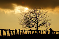 Golden Sunset (tampurio) Tags: light sunset sky panorama sun sunlight man tree silhouette clouds sunrise tramonto nuvole minolta sony beercan cielo tramonti sole paesaggi paesaggio padova slta58
