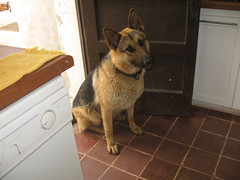 Balto (d1pinklady) Tags: chile santa dog house flower kitchen turkey los cherries cows sheep angeles furniture farm room bbq pit porch dinning rooster foyer limes figs fundo teresita hens copihue