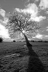 Angled (GI Les) Tags: morning winter light shadow bw white black tree sunrise early low common leaning rodborough minchinhampton