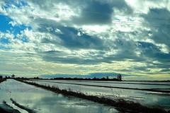 desde el coche | from the car (Ferrn) Tags: blue sky azul 35mm nikon cielo nikkor incredible ricefields catalua fromacar nikond3200 increble desdeelcoche d3200 nikkor35mm camposdearroz larpita