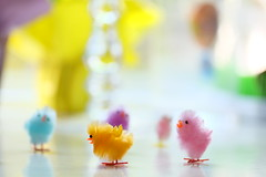 Doing the chicken dance at a wedding (The Dolly Mama) Tags: easter spring dancing bokeh pastel chicks lovely chenille chickendance