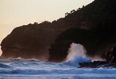 Splash (dicktay2000) Tags: focus sydney australia newsouthwales topaz warriewood richardtaylor 20150124img7263