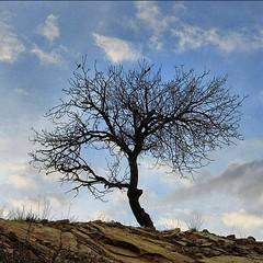 سلام.صبحتان بخیر.امیدوارم هفته خوبی پیش رو داشته باشید فاریاب/دشتستان/بوشهر shot by: canon G15 photo by: @msndr #نورنگار #کانن #عکاسی #بوشهر #دوربین #g15