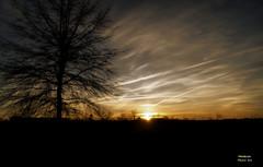 White Light (Wendy Gee Photo~Art) Tags: light tree clouds ngc npc