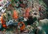 2014 Maldives - GoPro 17830.jpg
